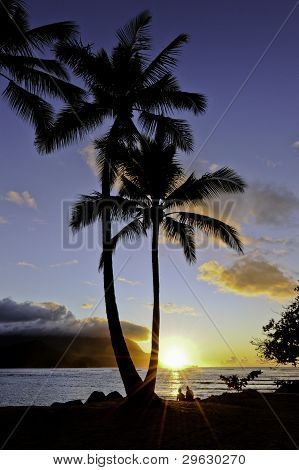 Hanalei Palm tree Sunset