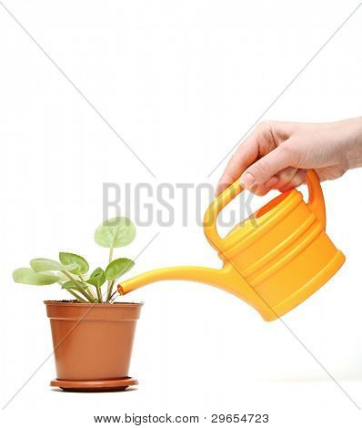 closeup hand watering a plant with yellow watering can