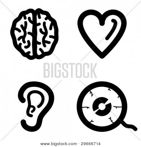 Brain, heart, ear, eye.