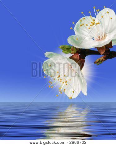 Flor sobre el agua