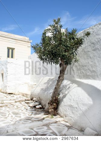 Olive Tree Outside Church - Paros Island, Greece