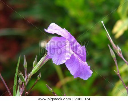 Purple Flower Close Up