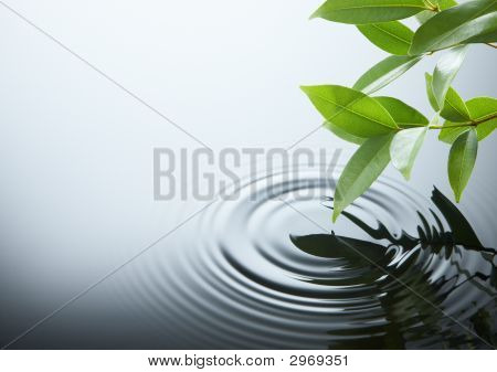 Water Ripple und leaf