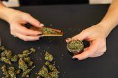 Woman Preparing And Rolling Marijuana Cannabis Joint. Close Up Of Marijuana Blunt With Grinder. Mari poster