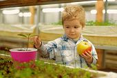 Child Care. Chil Care Of Plants In Greenhouse. Child Care Concept. Care Your Child By Healthy Eating poster