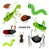 Illustration Of Vector Crawling Insects Isolated On White Background. Insect Bug, Fauna Wildlife, Ca poster