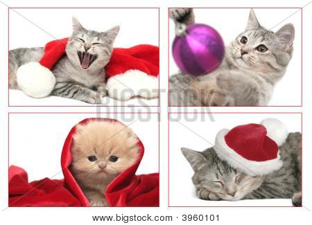 Cats And New Year On A White Background