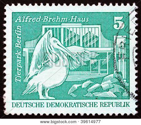 Postage stamp GDR 1973 Pelican, Berlin Zoo