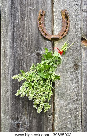 Lemon-balm Healthy Herbs And Rusty Horseshoe