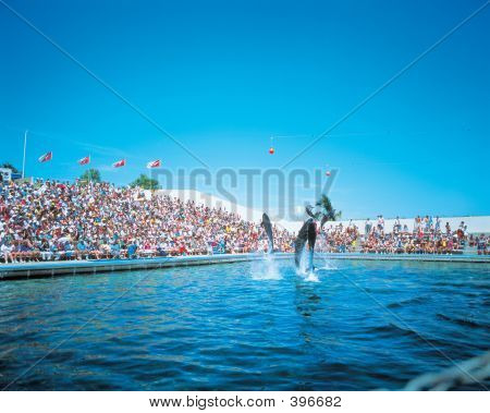 Dolphins In Theme Park