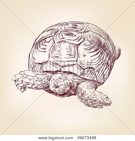 turtle hand drawn