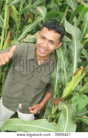hochwertige Mais Landwirtschaft