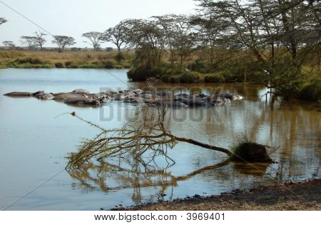 Landscape Of The Serengeti With Hippos