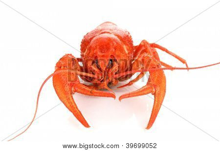 Tasty boiled crayfish isolated on white