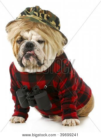 hunting dog - english bulldog dressed up like a redneck hunter with binoculars