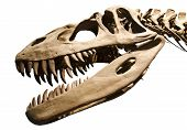 pic of jaw-bone  - Ancient Dinosaur skeleton over white isolated background - JPG