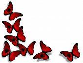Постер, плакат: Албанский флаг бабочки изолированные на белом фоне