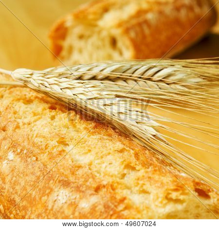 closeup of ciabata bread and some wheat ears