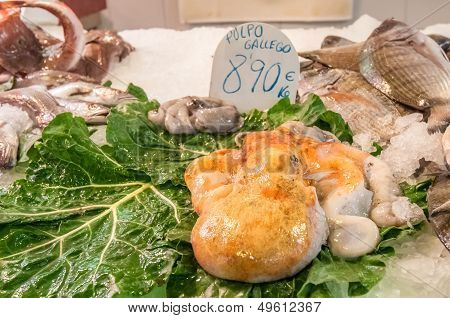 Galician Octopus In The Market