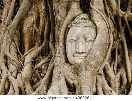 Old tree with buddha head in Ayutthaya
