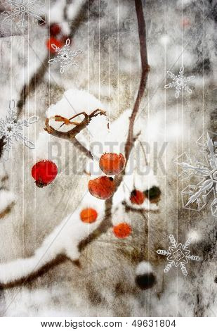 ash-berry - winter background - artistic picture