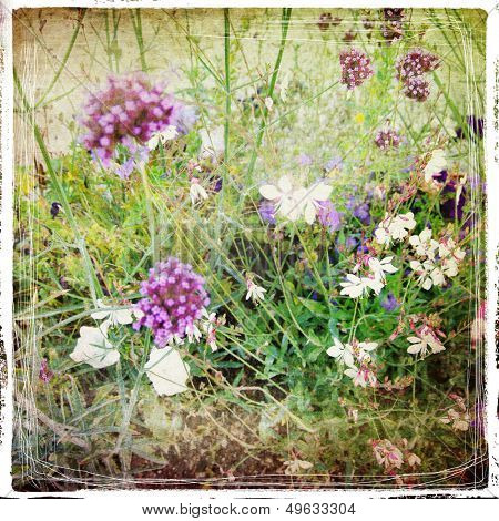 meadow flowers - vintage styled picture