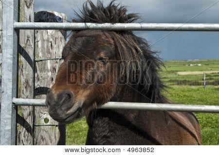 Horse In A Gate