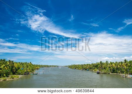 Palm trees along canal of Kerala backwaters in India