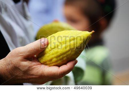 Hand holding citrus. Religious Jews chooses ritual plant - citron- on the bazaar on the eve of Sukkoth. September 22, 2010, Sukkoth market, Bene Brak, Israel