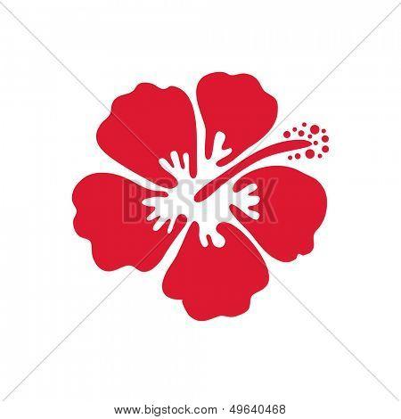 Hibiscus flower. Vector illustration.
