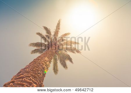 palm tree against sunny sky, retro style