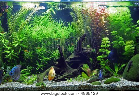 Planted Tropical Freshwater Aquarium