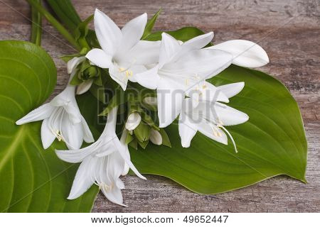 white flowers and leaves hosta on a wooden