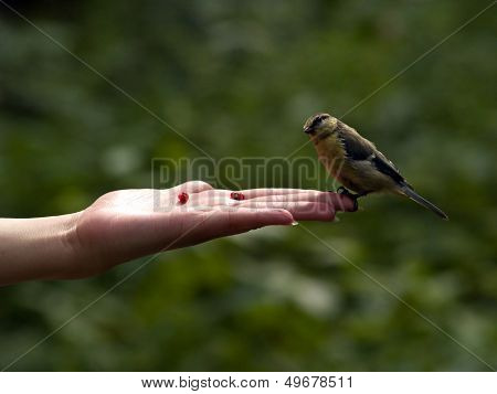 Real Bird In Hand