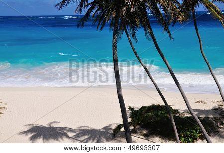 Palm Trees Shadows