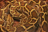 image of jungle snake  - Close up of the bright - JPG