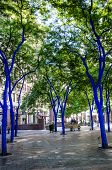 Blue trees in Seattle's Westlake Park
