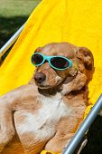 Dog on vacation with sunglasses at the camping