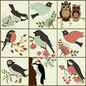 picture of woodpecker  - Bird set  - JPG