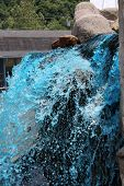 stock photo of gush  - a scenic Blue Fountain Gushing in the mountain - JPG