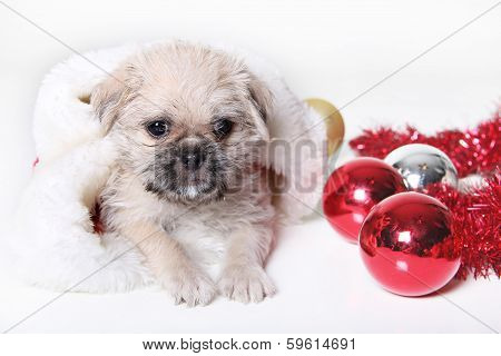 Holiday Puppy