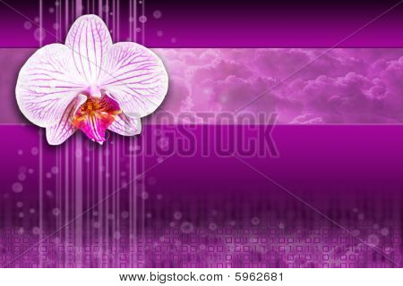 Orchid flower on purple background design