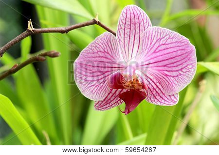 Nice Orchid flower - macro shoot