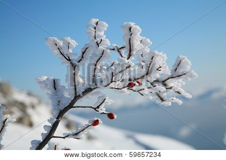 Frozen briar on a background of blue sky.