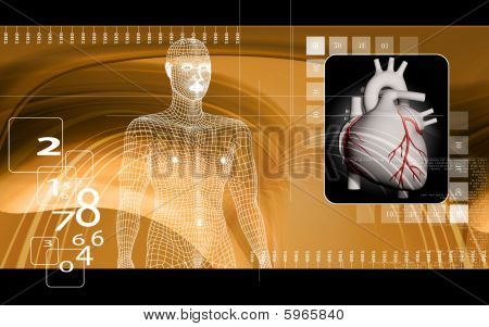 Heart and human body