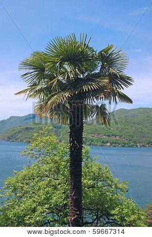 Morcote,Lake Lugano,Ticino Canton,Switzerland