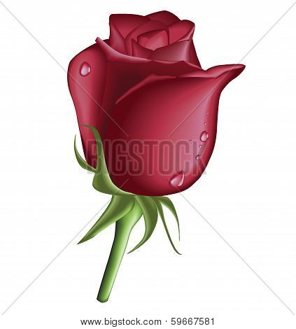 Red Rose Drop