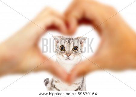 Human Hands Make Heart Shape And Cute Cat