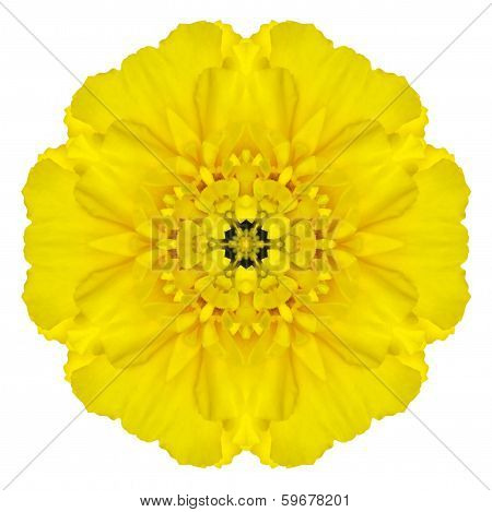 Yellow Concentric Marigold Mandala Flower Isolated On White