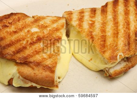 Toasted cheese sandwich with melting cheese oozing out.